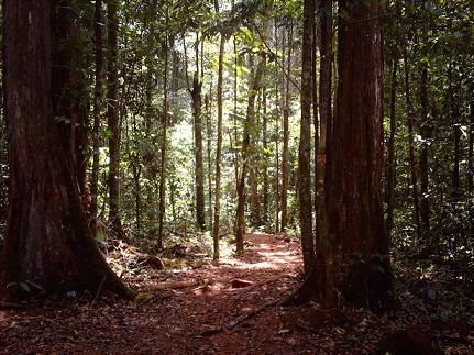 Regenwoud bij Brownsberg