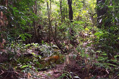 Regenwoud in Suriname