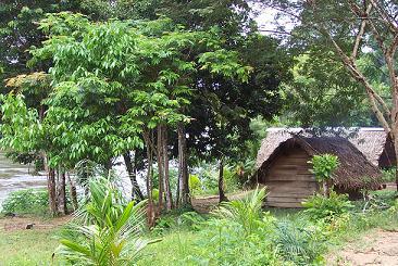 Huis in het regenwoud van Suriname