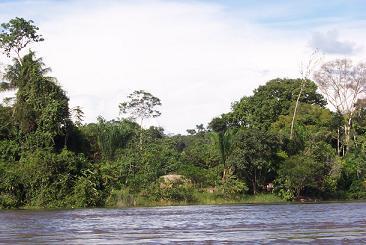 Varen langs het oerwoud van Suriname
