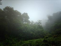 Tropisch regenwoud bij Brownsberg Natuurpark.