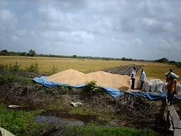 Landbouw in Nickerie