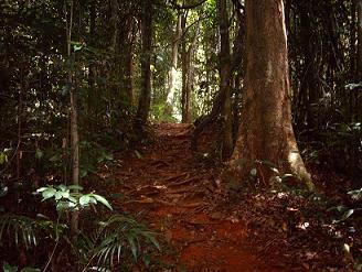 Regenwoud nabij Brownsberg Natuurpark